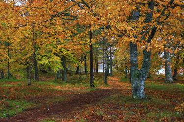 Autumn's day by Syzygi