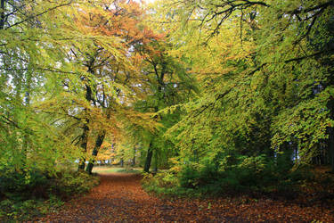 Magical forest by Syzygi