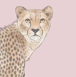 Cheetah by tikideer