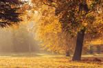 Golden Autumn by Artursphoto