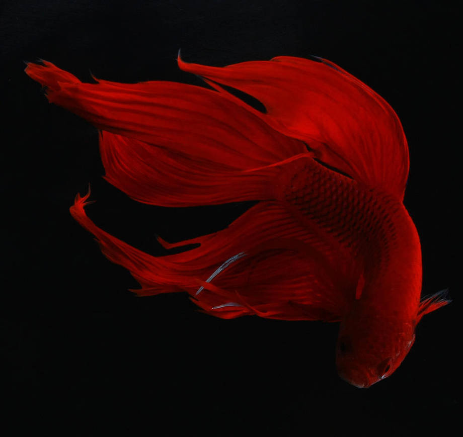 red love is falling... by lanetkedi