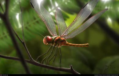 Dragonfly by Brunofournier144