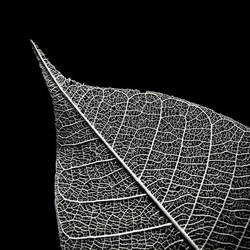 In Veins by S4SH4X