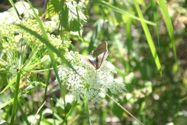 Butterflies on a Date by BloodCreek20