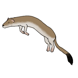 Stoat by Paleclaw
