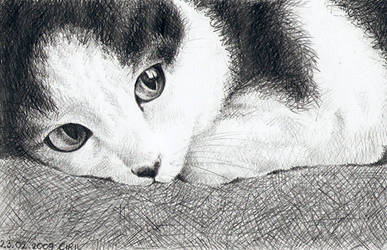Grey Cat - Guri by Ciril-chan