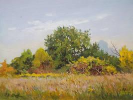 Meadow 4 by Dreamnr9