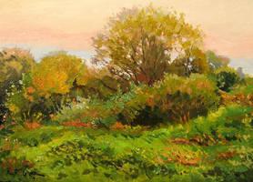 Meadow 5 by Dreamnr9