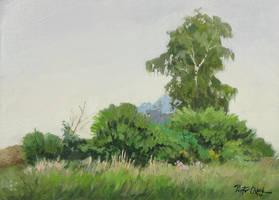 Meadow by Dreamnr9