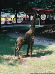 Zoo - Fake giraffe by NickACJones