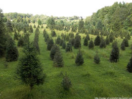Christmas tree farm by NickACJones