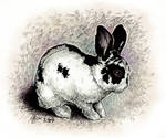 Cute bunny by Victoria-Poloniae