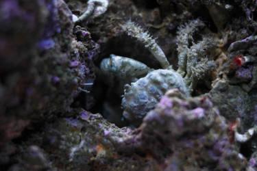 Dalolumbour by Redsterfish