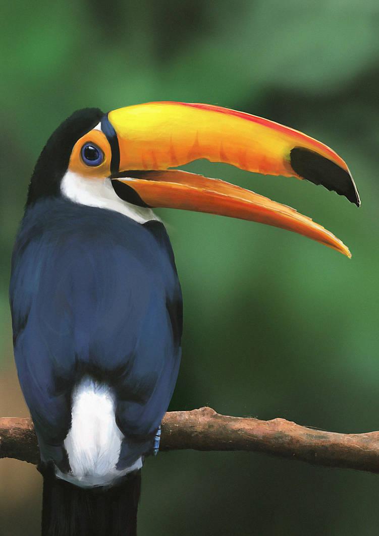 Toucan|Study by N-Deed