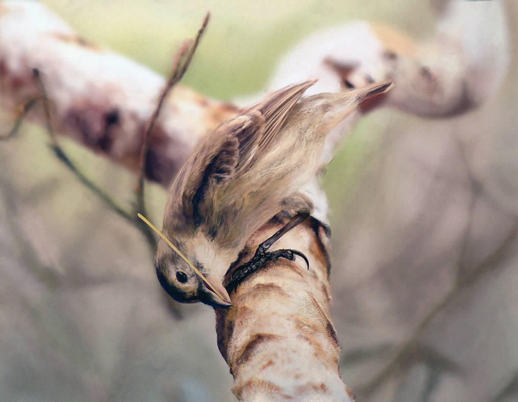Woodpecker Finch Study 2 by N-Deed