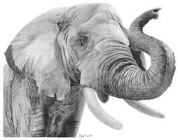 Elephant by artvandaley