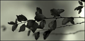 Leaves in infrared by LiveInPix