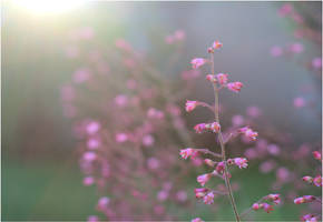 The sweetest thing by LiveInPix