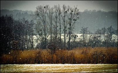 Let it snow ! by LiveInPix