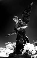 Black Fairy by hollycoffeebean