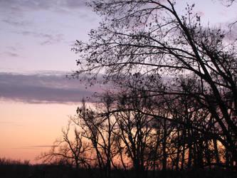 trees around a sunset by DisneyPrincessNeeNee