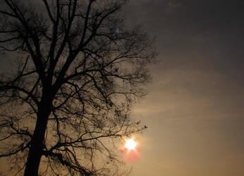 sunburst and tree by DisneyPrincessNeeNee