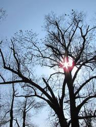 sunbrust through tree branches by DisneyPrincessNeeNee