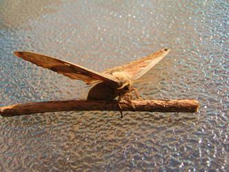 Polyphemus Moth by DisneyPrincessNeeNee