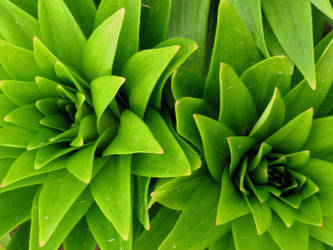 neat green plant by DisneyPrincessNeeNee