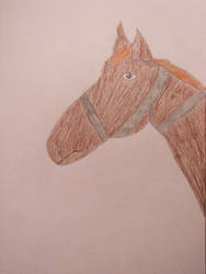 Horse drawing by DisneyPrincessNeeNee
