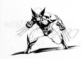 Wolverine by davidyardin