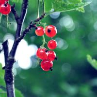 Red Berries by VinTage90