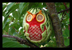 tropic-owl by VastandInfinite