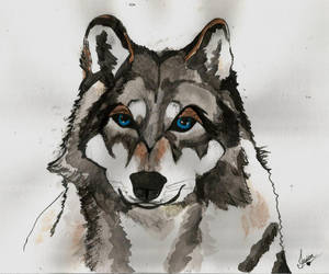 Wolf - Watercolor by JesseLambert