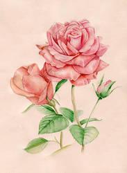 Roses by Emmatyan