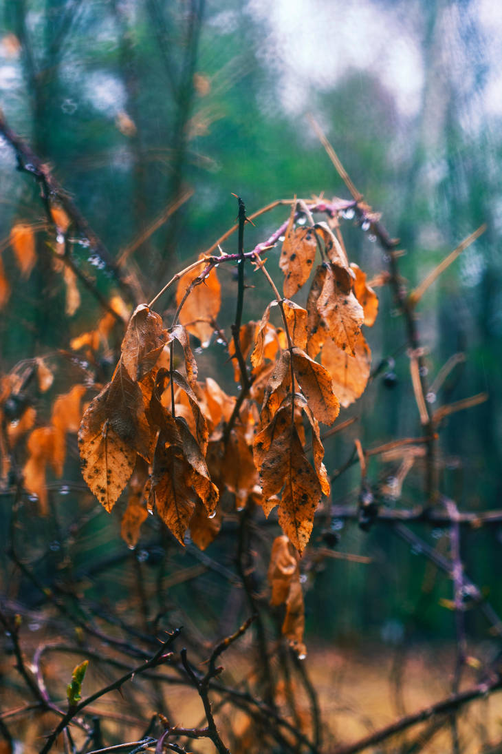 Weeping leaves by screenname911