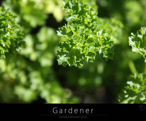 Gardener by stackelberg