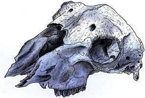 Skull by Auralous