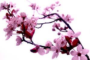 Sakura by Auralous