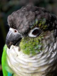 Green Cheeks by Ciameth