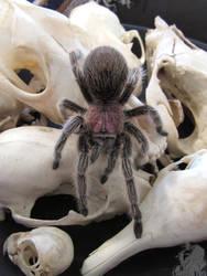 Bone Bowl and Tarantula by Ciameth