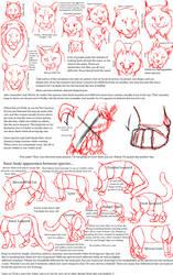 Big Cat Anatomy Sketches by CarmanMM-Dirda