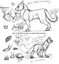Feline-Canine concepts by CarmanMM-Dirda
