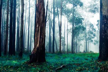 Electric Wood by DavidNowak