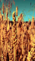 Grain by emptywall