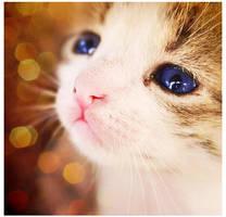 Meowww by xMissTake