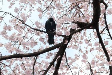Master of the sakura. by stephane-bdc