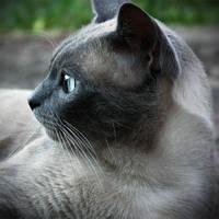 cat profile by thais-fb