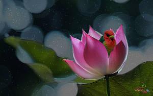 Lotus by vafiehya