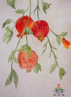 Pomegranate by vafiehya